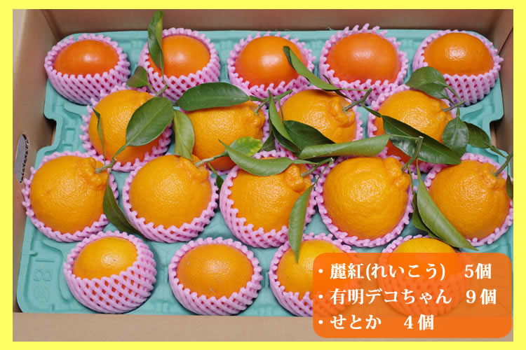 柑橘3種味くらべセット